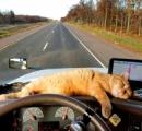 """""""猫さん危機一髪"""" 車体につかまり400マイル"""