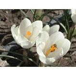 『春が来たカナダより』の画像
