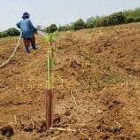 『地雷を除去した畑』の画像