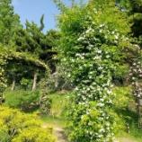 『靭公園のバラを見てきました』の画像