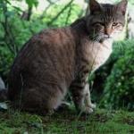 【画像】公園猫撮ってきたンゴ