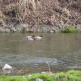 2010年 3月16日(火)都留・桂川と菅野川と山菜採りと温泉のサムネイル