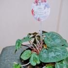 『《花騎士》 花騎士団長のド素人園芸日誌【4】』の画像