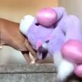 今週のベストペットたち~遊ぶのもやらかすのも全力投球!たまには見習ってみたい動物たちの生き方総集編