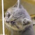 保護した子ネコは高いところに登るのが好き。お庭で散歩してみる → こうなります…