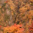 『休業のお知らせ 11/19~11/25』の画像