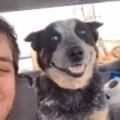 イヌと一緒に「自撮り」する。飼い主が振り返る → 犬の顔はこうなります…