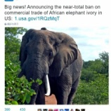 『米国で象牙の取引がほぼ全面的禁止決定』の画像