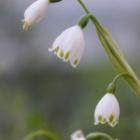 『春を感じて・・』の画像