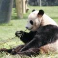 1869年3月11日は、「パンダ発見の日」
