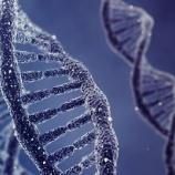 『遺伝子編集の暴走』の画像