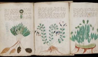 謎の古文書『ヴォイニッチ手稿』が誰でも無料でダウンロード可能に