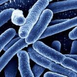 『生きた大腸菌にデータを格納』の画像