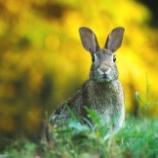 『野生ウサギをウイルスで駆除するニュージーランド』の画像