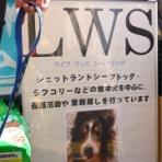 ライフウィズシープドッグ(LWS)
