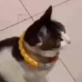 ネコが床に座ってケージを見ていた。可愛い子犬がいっぱいだにゃ♪ 扉が開いた → こうなった…