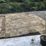 『【庭造り】格安の弱った芝生(TM-9)の雑な芝張り。1年経って超お得だった件』の画像
