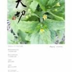 COCOemiブログ