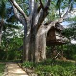 『見ているだけでワクワクする!世界のツリーハウス』の画像