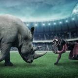 【画像】サイとカバが地上最強生物のアイツに挑んだ結果wwwww
