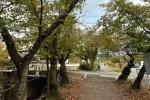 季節感じる!「星田妙見 星のみち」の桜の葉っぱがちょっと紅葉してて柿色の葉っぱが綺麗!