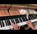 演奏中にずっとピアノの上で眠る猫が可愛い