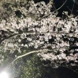 『2018年度 お花見』の画像