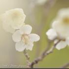 『2020年2月1日:万博公園で冬の花』の画像