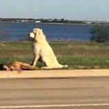 『見捨てない思い:事故死の友に寄り添う犬』の画像