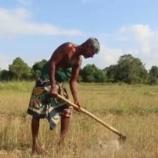 『スリランカの大干ばつ』の画像