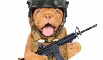 嘘のような戦略『動物を武器として利用した計画』が実在していた