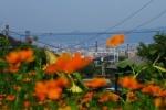 星田山手。季節の花々が咲く市民の憩いの場~交野まちなみ日記No.3~