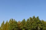 ミルキーウェイの並木道。これから紅葉だけどまだ葉っぱは緑!~インサイト交野No.106~