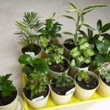 『100均観葉植物は100均雑貨に植替えで超おしゃれインテリアに変身する…! 1/2 【インテリアまとめ・インテリア雑貨人気ランキング 】』の画像