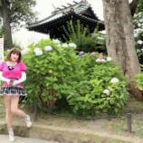 『【留美子讃歌 9】紫陽花の名所、白山神社にて』の画像