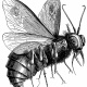 【悪魔】ベルゼブブ、ハエの姿をした「悪霊の頭」 カナンの民の預言神