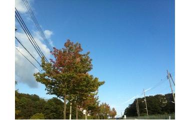 『秋色』の画像