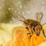 『昆虫の激減と生態系の崩壊』の画像