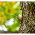 戻ってきた森の留鳥たち