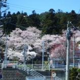 『大年寺の桜』の画像