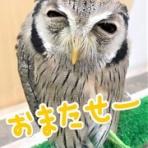 フクロウのみせblog