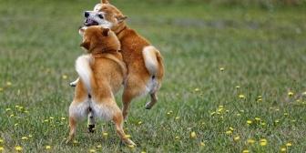 留守番中、庭で飼ってた犬が野良犬と交尾を始めた。何も知らなかった小学生の私はそれを見てとんでもない勘違いをしてしまい…