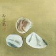 速水御舟: 蛤 速水御舟と吉田善彦 ―師弟による超絶技巧の競演― 山種美術館