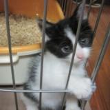 十条猫動画スタート!子猫のはな VS ゾイド その1のサムネイル