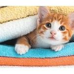 可愛い猫とかひよことか見ると踏み潰したりしたくなる衝動にかられるんやが・・・