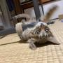 【写真日記】ザッとチビ猫成長記