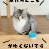 『きょうのいちまい・おかーさんキライ』の画像