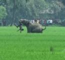 野生ゾウの襲撃で犠牲者15人、射殺も視野に インド環境当局
