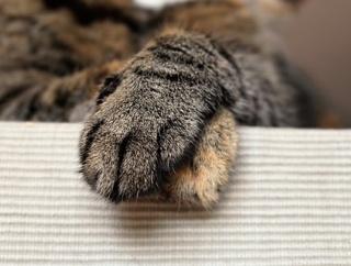 【動画】どっちが指を上に乗せるか選手権が話題w反応まとめ【猫】