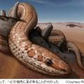 進化の不思議?初期のヘビに7000万年にわたり足があった!新化石から判明